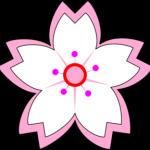 white-pink-sakura-md